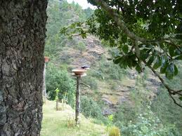 100 Oak Chalet OAK CHALET Mukteshwar Wildlife And Birdwatching Around The