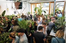 100 Designer Warehouse Sales Melbourne Huge Indoor Plant Sale Rare Plant Party