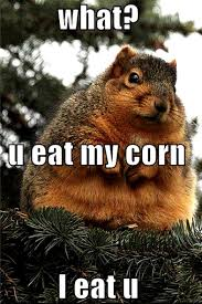 Does Hairspray Keep Squirrels Away From Pumpkins by Meet Fatty Mcfatterson Hes As Big As A Cat Squirrels