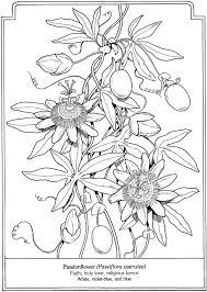 Passionflower Passiflora Caerulea From The Language Of Flowers Coloring Book