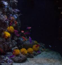 Reef Aquarium Rock Wall Aquascapes Can Be Interesting News Reef ... Is This Aquascape Ok Aquarium Advice Forum Community Reefcleaners Rock Aquascaping Contest Live Rocks In Your Saltwater Post Your Modern Aquascape Reef Central Online There A Science To Live Rock Sanctuary 90 Gallon Build Update 9 Youtube Page 3 The Tank Show Skills 16 How Care What Makes Great Large Custom Living Coral Aquariums Nyc