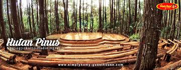Ternyata Liburan Di Hutan Pinus Jogja Asik Juga Lho Berasa Seperti Film Twilight