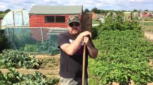 100 Wunderground Dublin Griffin Allotments Grow Your Own Fruit Veg On