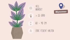 welche pflanze für welches zimmer 7 geniale und hilfreiche