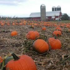Pumpkin Patch Jacksonville Al by Ellms Family Farm Home Facebook