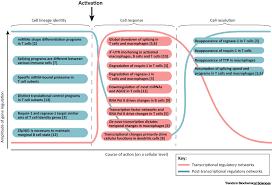 A Translational Innovation Forum Ppt Immune Responses Transcriptional And Post Transcriptional Networks