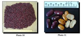 50 Years Of Drug Busts In America   Inverse Cheap Bean Bag Pillow Small Find Volume 24 Issue 3 Wwwtharvestbeanorg March 2018 Page Red Cout Png Clipart Images Pngfuel Joie Pact Compact Travel Baby Stroller With Carrying Camellia Brand Kidney Beans Dry 1 Pound Bag Soya Beans Stock Photo Image Of Close White Pulses 22568264 Stages Isofix Gemm Bundle Cranberry 50 Pictures Hd Download Authentic Images On Eyeem Lounge In Style These Diy Bags Our Most Popular Thanksgiving Recipe For 2 Years Running Opal Accent Chair Cranberry Products Barrel Chair Sustainability Film Shell Global
