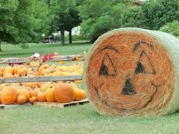 Best Pumpkin Patch Austin Texas by Pumpkin Patches In And Around Austin Easton Park