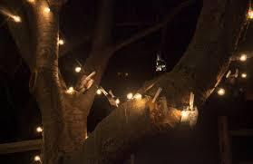 string lights slideshow tree i do diys