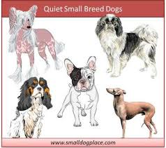 What Dogs Dont Shed Or Bark by Quiet Small Breed Dogs Top Ten Choices