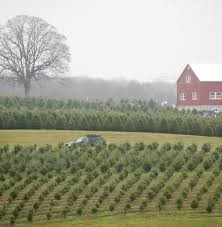 Bengtson Christmas Tree Farm by 100 Christmas Tree Farms Little Hiccups Christmas Tree Farm