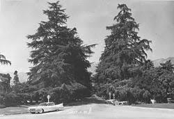 Alameda Christmas Tree Lane 2015 by Christmas Tree Lane Wikipedia