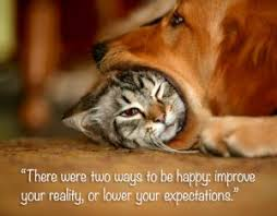 cat quotes inspirational quotes cats quotes for all