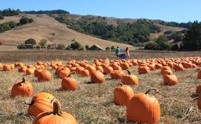 Peter Pumpkin Patch Petaluma by Pumpkin Patches Marin Mommies