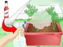Pot Plants For The Bathroom by 3 Ways To Keep A Cat Out Of Potted Plants Wikihow