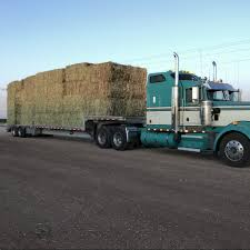Milo Stalks Hay For Sale In Clovis, - Hay Map Hay For Sale In Boon Michigan Boonville Map Outstanding Dreams Alpaca Farm Phil Liske Straw Richs Cnection Peterbilt 379 At Truckin Kids 2013 Youtube Bruckners Bruckner Truck Sales Lorry Stock Photos Images Alamy Mitsubishi Raider Wikipedia For Lubbock Tx Freightliner Western Star Barmedman Motors Cars Sale In Riverina New South Wales On Economy Mfg Dennis Farms Equipment Auction The Wendt Group Inc Land And