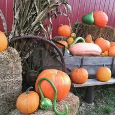 San Martin Pumpkin Patch by Mcwilliams Pumpkin Patch Home Facebook