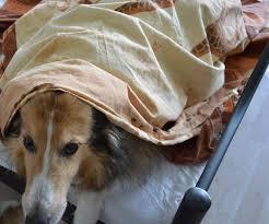 studie der hund im schlafzimmer stört nicht mf tierblog