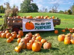 Papas Pumpkin Patch Nd by Top 5 Best Pumpkin Patches In North Dakota 2016