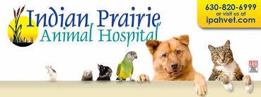 benson animal hospital indian prairie animal hospital home