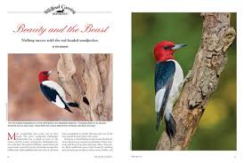 wildfowl carving magazine the only magazine for bird carvers