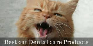cat dental care best cat dental care products for healthy cat teeth cattention