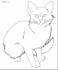 Great Realistic Cat Coloring Pages With Kitty And Cute Kitten