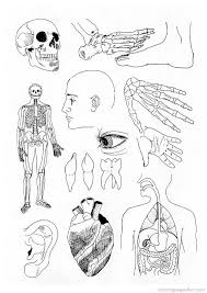 Anatomy Coloring Pages Free