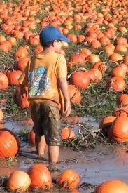 Pumpkin Picking Richmond by 30 Best Richmond B C 71 U0027 96 U0027 Images On Pinterest Vancouver