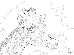 Click The Rothschild Giraffe Head Coloring Pages To View Printable Version Or Color It Online Compatible With IPad And Android Tablets