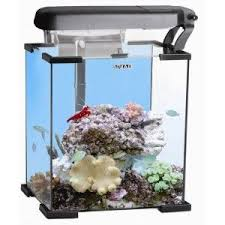 aquarium nano eau de mer les 25 meilleures idées de la catégorie aquarium récifal sur