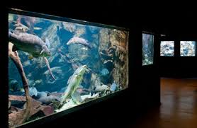 musee de la porte doree parking space tropical aquarium palais de la porte dorée