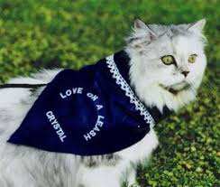 service cats 42 best therapy cats images on therapy animals and cats