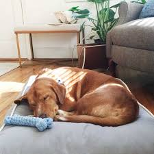Harry Barker Dog Bed by Emily Lott Of Cooper Thames On 5 Ways To Do Spoleto Right