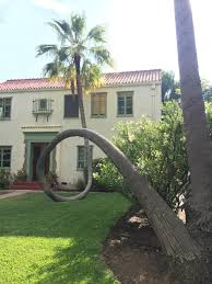 This Palm Tree Fell Over And Curved Right Back Up : Mildlyinteresting Front Yard Landscaping With Palm Trees Faba Amys Office Photo Page Hgtv Design Ideas Backyard Designs Wood Above Concrete Wall And Outdoor Garden Exciting Tropical Pools Small Green Grasses Maintenance Backyards Cozy Plant Of The Week Florida Cstruction Landscape Palm Trees In Landscape Bing Images Horticulturejardinage Tree Types And Pictures From Of Houston Planting Sylvester Date Our Red Ostelinda Southern California History Species Guide Install