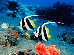 Everybody s favorites images Tropical fish HD wallpaper and