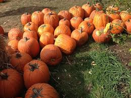 Kent Ohio Pumpkin Patches by The 2015 Chagrin Falls Pumpkin Roll Was A Smash Scene And Heard