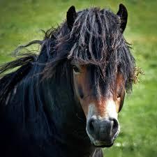 pin auf draft horses
