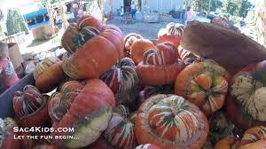 Rombachs Pumpkin Patch by Zittel Farm Pumpkin Patch Youtube