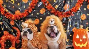 Kxvo Pumpkin Dance Spooky Scary Skeletons by Funny Halloween Memes 2017 Youtube