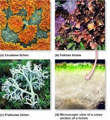 Oceanos Sinking Moss Hills by Lichen Types And Structure Lichen Symbiosis Pinterest