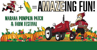Glendale Pumpkin Patch by The Official Website Of The Tucson Roadrunners News