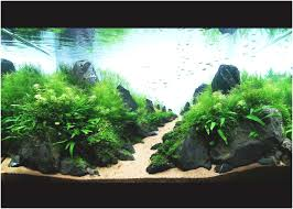 Aquascape Aquarium Designs Fresh Modern Aquarium Design With ... 329 Best Aquascape Images On Pinterest Aquarium Ideas Floratic Visiting Paradise At Shah Alam Planted Aquarium Aquascape Things Aquariums Aquascaping Malaysia Diy Pertama Kali Aquascaping October 2010 Of The Month Ikebana Aquascaping World Sumida Aquarium Reloaded Fish Tanks And Designs Awesome A Moss Experiment Its All About Current Low Tech Tank Cuisine Wonderful Small Cubical Styles Planted The Surreal Submarine Amuse