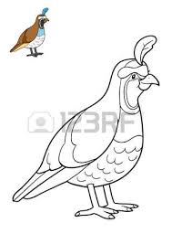 Coloring Book For Children Quail Photo