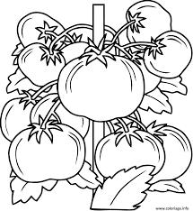 Coloriage Tomate Fruit Legume JeColoriecom