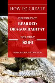 Bearded Dragon Heat Lamp Amazon by Create A Huge Bearded Dragon Habitat For 360 Bearded Dragon Tank
