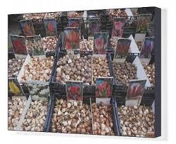 cheap flower bulbs sale find flower bulbs sale deals on line at