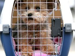 Is Your Pet Safe Flying In Cargo
