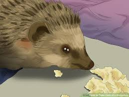 Ceramic Heat Lamp For Hedgehog by How To Take Care Of A Hedgehog With Pictures Wikihow
