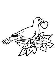 Coloring Book For Birds